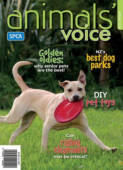 Animals' Voice magazine cover