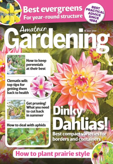 Amateur Gardening digital cover
