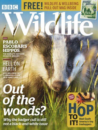 BBC Wildlife Magazine digital cover